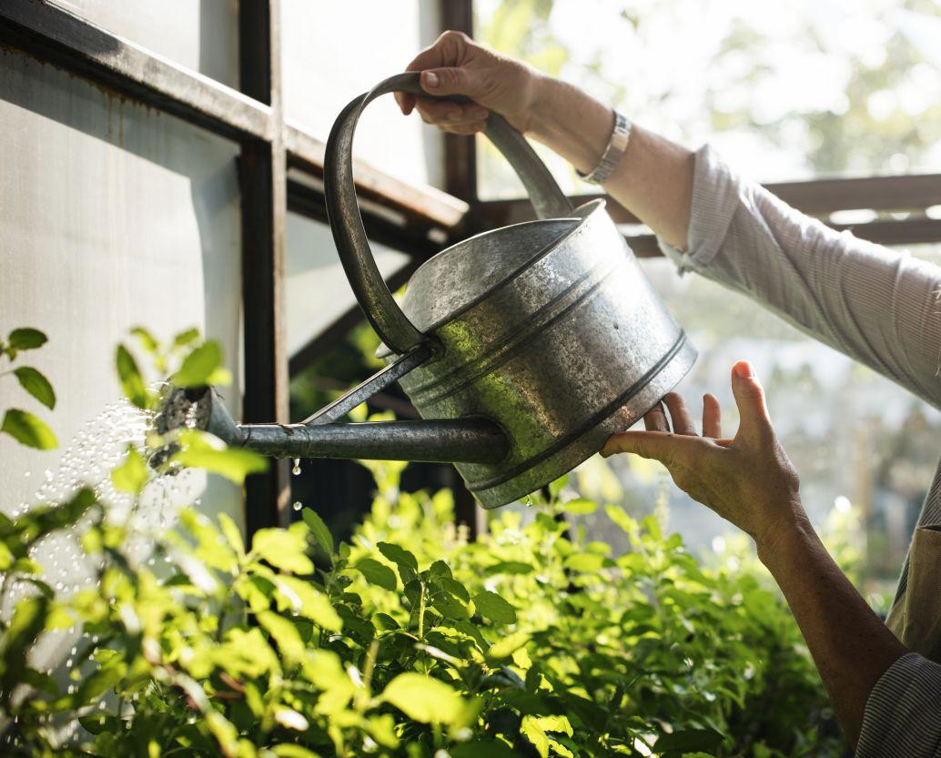 Planten water geven als je een weekendje weggaat #17